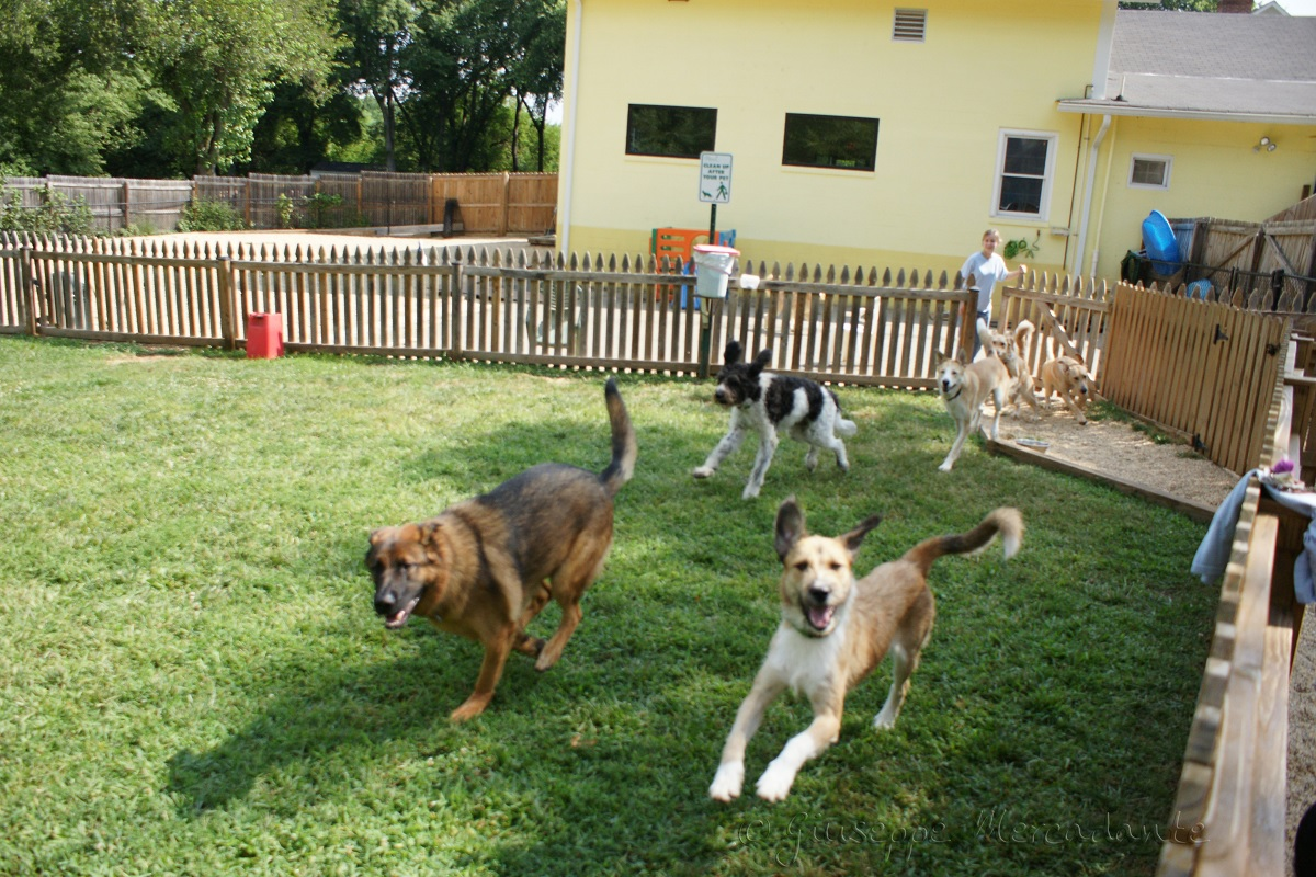 The Benefits of Dog Day Care